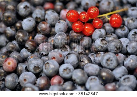 Blueberries And Redcurrants