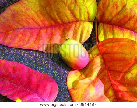 Fall Leaves And Acorn
