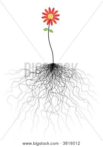 Flower And Roots