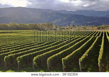 Well Kept Vineyard