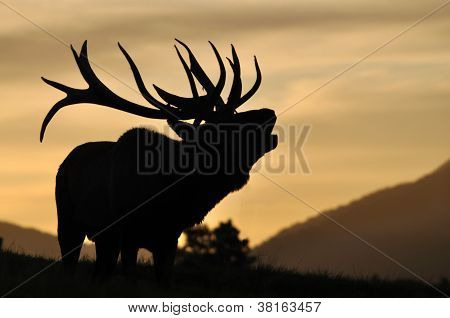 Red Deer Stag At Sunset
