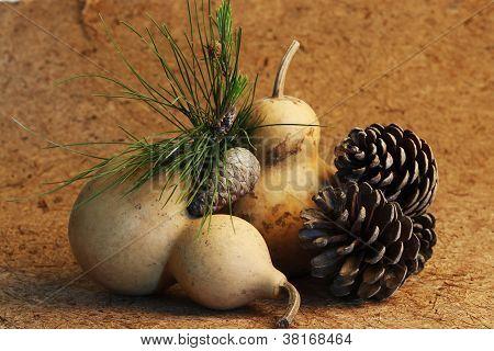 Calabash And Pine Cones