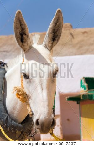 Donkey In Kharga\'S City