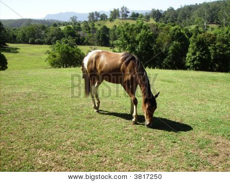 Brumby At Mountainthyme Sanctuary