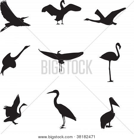 Set of different photographs of birds seamless pattern. Vector i