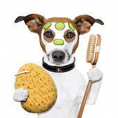 picture of bath sponge  - wellness spa wash sponge dog with a mask - JPG