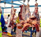 stock photo of slaughterhouse  - slaughterhouse cows hanging on meat hooks and working - JPG