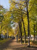 foto of sankt-peterburg  - Autumn alley in the city Sankt - JPG