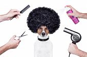 stock photo of hair dye  - hairdresser scissors comb dog dryer hair and spray - JPG