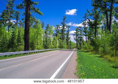 Gunflint Trail, White Pine