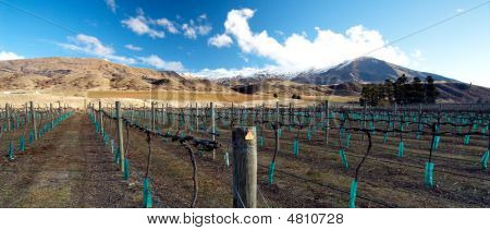 Central Otago Winery In Winter