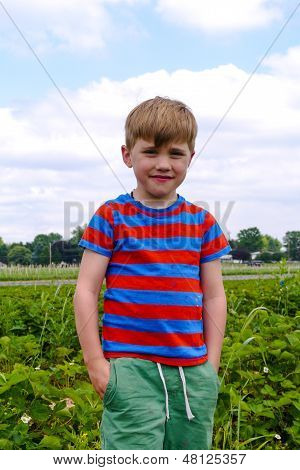 Young Boy Picking Strawberries At A Farm During Summer