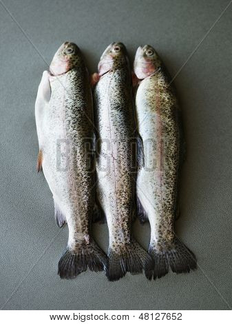 Closeup of three dead fish lying side by side on gray surface