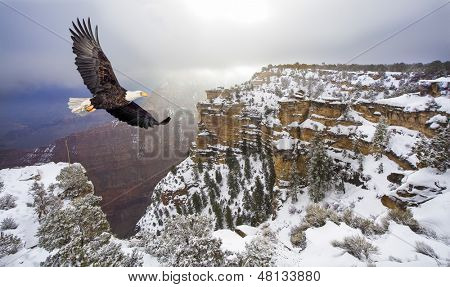 Bald eagle flying above grand canyon