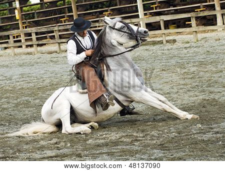 South American Cowboy in White Horse