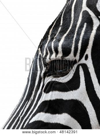 Head of a zebra isolated from the background