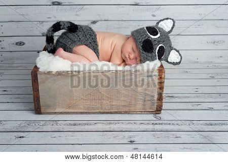 Newborn Baby Boy In A Raccoon Costume