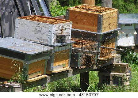 Several bee hives in a row