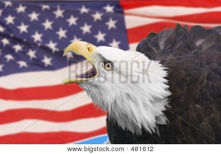 Eagle Composite