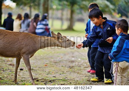NARA, JAPAN - NOVEMBER 18: unidentified children feed wild deer senbei crackers November 18, 2012 in Nara, JP. Once considered divine and sacred, the deer of Nara are now instead designated as National Treasures.