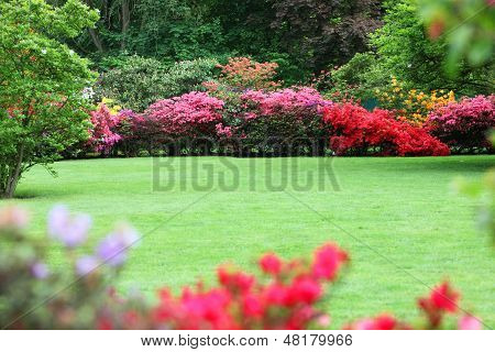 Beautiful Garden With Flowering Shrubs