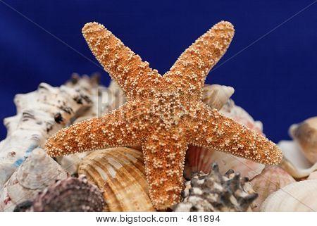 Starfishonblue_02