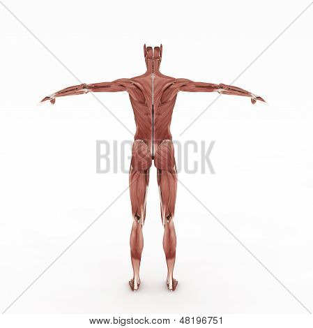 Female Muscular Bake Site