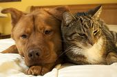 picture of cat dog  - dog and cat relaxing on the bed - JPG