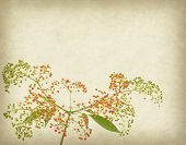 Bunch of yellow rowan on grunge textured background