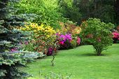 pic of manicured lawn  - Colourful flowering shrubs in a spring garden in shades of yellow pink and red bordering a neatly manicured lush green lawn with a backdrop of dense trees - JPG
