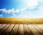 stock photo of farm land  - wooden floor and summer wheat field - JPG