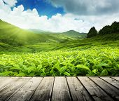 stock photo of cameron highland  - wood floor on tea plantation Cameron highlands - JPG
