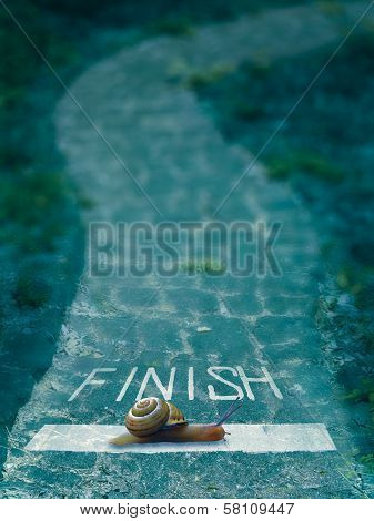 Snail Going Over The Finish Line, Concept