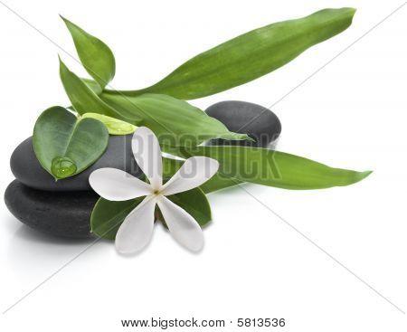 Steine mit Green leafs und weiße Blume