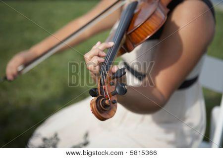 violin musician