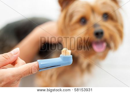 Hand Holding Dog Toothbrush.