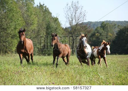 Group Of Horses Running In Freedom