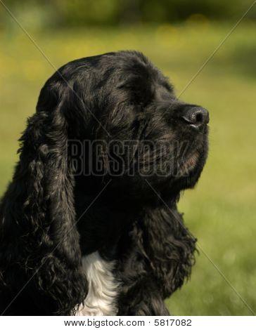 Profiled Dog