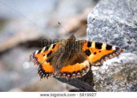 Butterfly Sitting On The Rock