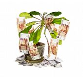 stock photo of cash cow  - Decorative tree with cash notes on branches on a white background - JPG