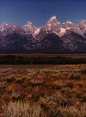 stock photo of sagebrush  - The Grand Tetons provide a beautiful backdrop to a Wyoming prairie blooming with wildflowers near Jackson Hole - JPG