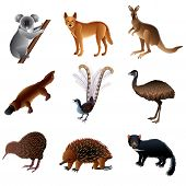 foto of platypus  - Popular Australian animals high detailed vector collection - JPG