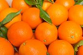 foto of valencia-orange  - Closeup of tasty spanish oranges freshly collected - JPG