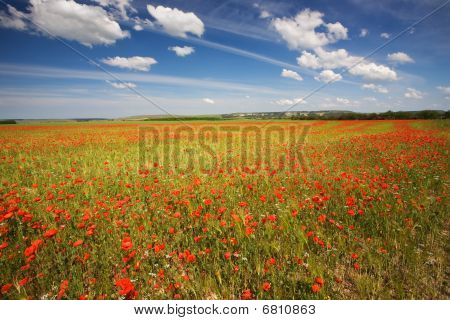 Spring Field Of Red Poppies