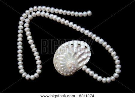 White Pearls And Nacreous Cockleshell On The Black Velvet