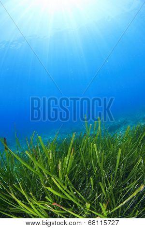 Green Grass Underwater Blue Sea seaweed