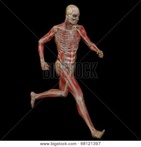High resolution conceptual man or human 3D anatomy or body illustration isolated on black background