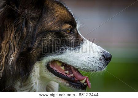 Dreamdog