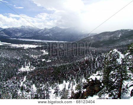 Snowy Pine Forrest