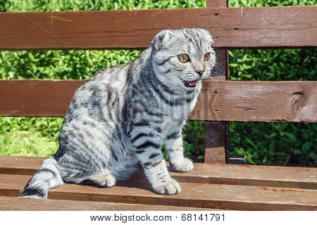 Cat Sitting On A Park Bench